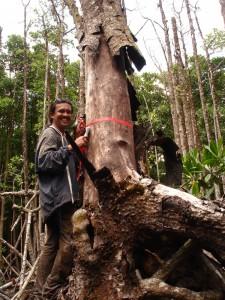 cropped-AAA-Fieldwork-in-Daintree-Mangroves-1.jpg