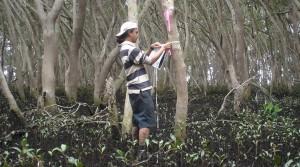 cropped-AAA-Fieldwork-in-Moreton-Bay-Mangroves-1.jpg