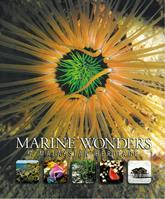 Marine Wonders: A Malaysian Heritage