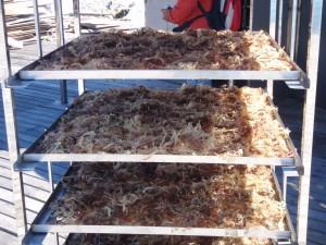 SeaweedDryer1